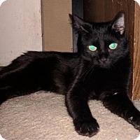 Adopt A Pet :: Katniss - Glendale, AZ