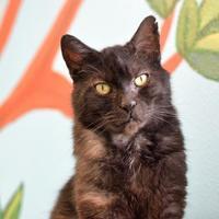 Adopt A Pet :: Sweetie - Redmond, OR