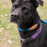 Adopt A Pet :: Mammie - Terre Haute, IN