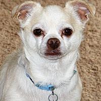 Adopt A Pet :: Sweet Pea - Durham, NC