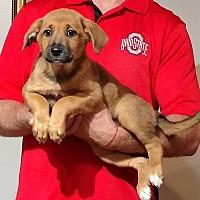 Adopt A Pet :: Tasha - South Euclid, OH