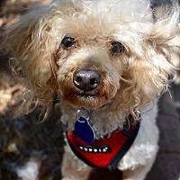 Adopt A Pet :: Gordon - Atlanta, GA