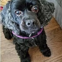 Adopt A Pet :: Mia171 - Twin Lakes, WI
