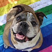 Adopt A Pet :: Fawn - Santa Ana, CA