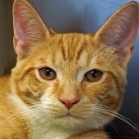 Adopt A Pet :: Rhett - Sprakers, NY