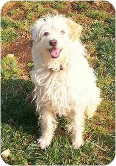 Terrier (Unknown Type, Medium)/Jack Russell Terrier Mix Dog for adoption in Culver City, California - Skipper