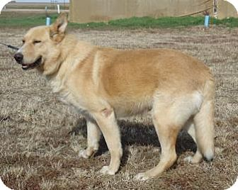 German Shepherd Dog/Labrador Retriever Mix Dog for adoption in Larned, Kansas - Charlie