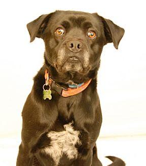 Labrador Retriever Mix Dog for adoption in Newland, North Carolina - Cerby
