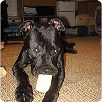 Adopt A Pet :: Jack - Reisterstown, MD