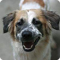 Adopt A Pet :: Tessa - Canoga Park, CA