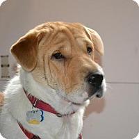 Adopt A Pet :: Lolly - Newport, VT
