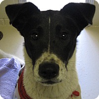 Adopt A Pet :: Bandit - Wickenburg, AZ