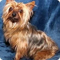 Adopt A Pet :: Austin - Encino, CA