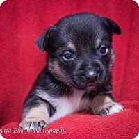 Adopt A Pet :: Rudi - Daleville, AL