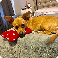 Adopt A Pet :: Zoey - Miami, FL