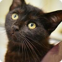 Adopt A Pet :: Mavis - Aiken, SC