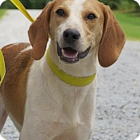 Adopt A Pet :: Keebler - Richmond, VA