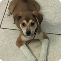 Adopt A Pet :: Cocoa - Royal Palm Beach, FL
