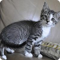 Adopt A Pet :: BAILEY (So needy!) - New Smyrna Beach, FL