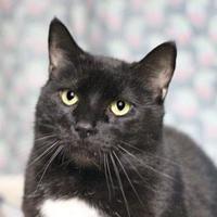 Adopt A Pet :: JC 106 - Mentor, OH