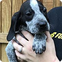 Adopt A Pet :: Oats (Danielle-Camden) - Blossvale, NY