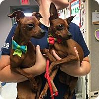 Adopt A Pet :: Arrow - Pelzer, SC