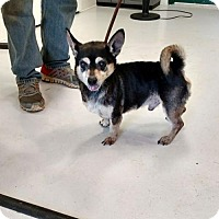 Adopt A Pet :: Drako - Mt. Gilead, OH