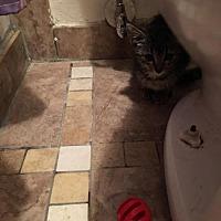 Adopt A Pet :: Olivia - Littleton, CO