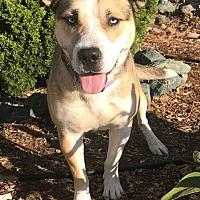 Adopt A Pet :: Diamond - Santa Monica, CA