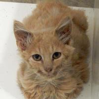 Adopt A Pet :: Smudge - Vienna, OH