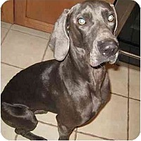 Adopt A Pet :: ADOPTED! Blue (#2) - Eustis, FL