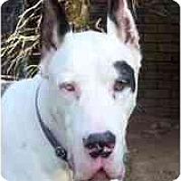 Adopt A Pet :: HERCULES - Pearl River, NY
