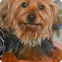 Adopt A Pet :: Reba - Greensboro, NC