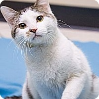 Adopt A Pet :: Guy - Chicago, IL