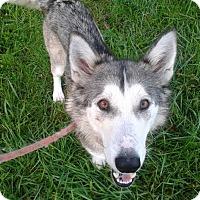 Adopt A Pet :: Sadie - Augusta County, VA
