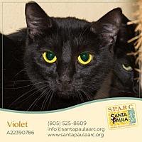 Adopt A Pet :: Violet - Santa Paula, CA