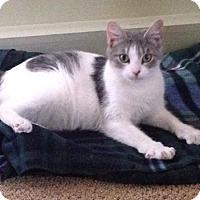 Adopt A Pet :: Lila - Plainville, MA