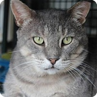 Adopt A Pet :: Gunther - Hamilton, ON