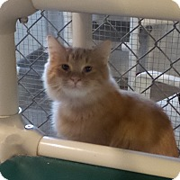 Adopt A Pet :: Axel - Geneseo, IL