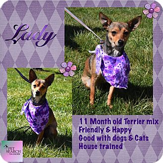 Terrier (Unknown Type, Small) Mix Dog for adoption in Washington, Pennsylvania - Lady