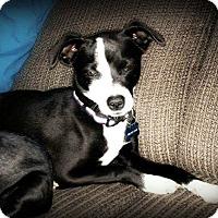 Adopt A Pet :: Erin - Tijeras, NM