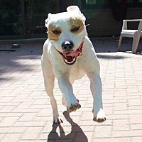 Adopt A Pet :: Zoe - Munster, IN