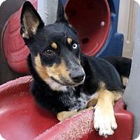 Adopt A Pet :: Nova - Las Vegas, NV