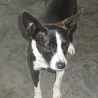 Adopt A Pet :: Sadie - Bonifay, FL