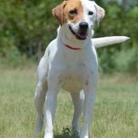 Adopt A Pet :: Rosie - Gainesville, TX