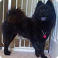 Adopt A Pet :: Vivian! - Sacramento, CA