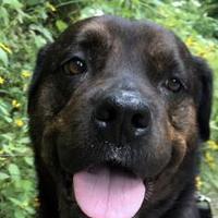 Adopt A Pet :: Queenie - Ann Arbor, MI