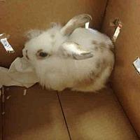 Adopt A Pet :: EINSTEIN - Los Angeles, CA