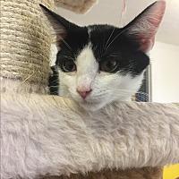 Adopt A Pet :: ZORRO! - Owenboro, KY