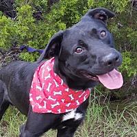 Adopt A Pet :: Gunner - Lago Vista, TX